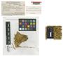 Acroporium plicatum E. B. Bartram, L. J. Brass 13912, Type [status unknown], F