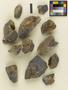 Microglaena corrosa var. carnea B. de Lesd., Italy, C. Sbarbaro, Isotype, F