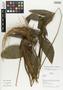 Flora of Ucayali, Peru: Geonoma macrostachys var. acaulis (Mart.) A. J. Hend., Peru, J. G. Graham 143, F