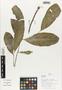Flora of Ucayali, Peru: Gymnosporia, Peru, J. G. Graham 2320, F