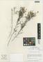 Flora of the Lomas Formations: Limonium plumosum (Phil.) Kuntze, Chile, M. O. Dillon 5070, F