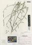 Pteromonnina pterocarpa image