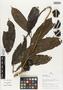 Flora of Ucayali, Peru: Casearia pitumba Sleumer, Peru, J. Schunke Vigo 15450, F