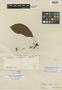 Paullinia stellata Radlk., FRENCH GUIANA, M. Mélinon 47, Isotype, F