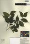 Chlorophora tinctoria (L.) Gaudich. ex Benth., Mexico, R. C. Durán 1828, F