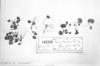 Hydrocotyle bonplandii image