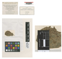 Sclerotium salicinum Pers., Germany [France], J. B. Mougeot 386, Type [status unknown], F