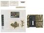 Torula fuliginosa Pers., Germany [France], J. B. Mougeot 589, Type [status unknown], F