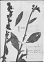 Field Museum photo negatives collection; Genève specimen of Gesneria vargasii DC., VENEZUELA, J. M. Vargas, Type [status unknown], G-DC