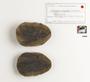 Neuropteris decipiens, Middle Pennsylvanian, Carbondale Fm, Francis Creek Shale Mbr, USA, IL, Mazon Creek Region