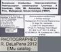 FMNHINS11060 Heteroscorpion raselimananai HT labels
