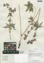 Geranium pratense L., China, D. E. Boufford 29652, F