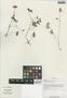 Geranium pylzowianum Maxim., China, D. E. Boufford 29515, F