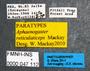 FMNHINS47112 l Aphaenogaster reticulaticeps PT