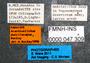 FMNHINS47309 l Acanthostichus punctiscapus PT