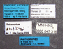 FMNHINS47316 l Tetramorium snellingi