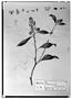 Field Museum photo negatives collection; Genève specimen of Monnina ciliolata DC., MEXICO, M. Sessé, Type [status unknown], G