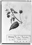 Field Museum photo negatives collection; Genève specimen of Sida carnea DC., MEXICO, M. Sessé, Type [status unknown], G