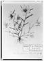 Field Museum photo negatives collection; Genève specimen of Sida brachystemon DC., MEXICO, M. Sessé, Type [status unknown], G