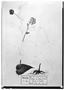Field Museum photo negatives collection; Genève specimen of Sida amplixifolia DC., MEXICO, M. Sessé, Type [status unknown], G