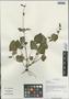 Salvia trijuga Diels, China, D. E. Boufford 35056, F