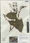 Salvia przewalskii var. mandarinorum (Diels) E. Peter, China, D. E. Boufford 37151, F