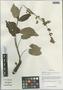 Salvia przewalskii var. przewalskii, China, D. E. Boufford 35461, F