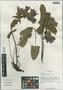 Salvia prattii Hemsl., China, D. E. Boufford 33242, F