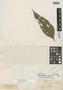 Myrcia fascicularis O. Berg, PERU, E. F. Poeppig 1652=141, Isotype, F