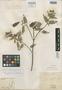 Salvia acutifolia Ruíz & Pav., PERU, J. Dombey s.n., Isotype, F