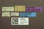 3047945 Megalopsidia breyeri HT labels IN