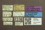 3047946 Megalopsidia bruchi HT labels IN