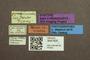 3047929 Megalops quadrimaculatus ST labels IN