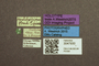 3047930 Megalops pulcherrimus HT labels IN