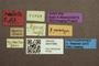 3047956 Megalops pauxillus ST labels IN