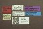 3047969 Megalopsidia cuneola HT labels IN