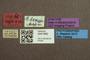3047966 Megalopsidia hamata ST labels IN