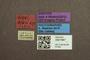 3047967 Megalopsidia mrazi ST labels IN
