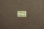 3047969 Megalopsidia cuneola HT labels 2 IN