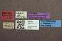 3047973 Megalopsidia triseriata ST labels IN