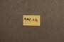 3047976 Megalopinus magnus HT labels 2 IN