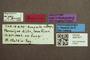 3047977 Megalopinus niger HT labels IN