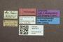 3047971 Megalopsidia plaumanni ST labels IN