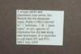 3047971 Megalopsidia plaumanni ST labels 2 IN