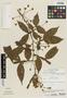 Inga acuminata Benth., Costa Rica, P. H. Raven 20998, F