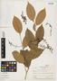 Ouratea soderstromii Sastre, British Guiana, R. S. Cowan 2079, Isotype, F