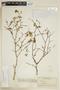 Euphorbia skottsbergii image