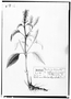 Field Museum photo negatives collection; Genève specimen of Salvia patzquarensis, MEXICO, M. Sess?, Type [status unknown], G