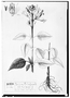 Field Museum photo negatives collection; Genève specimen of Salvia palafoxiana, MEXICO, M. Sess?, Type [status unknown], G