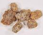 Boswellia serrata Roxb. ex Colebr., Frankincense, Palestine, F